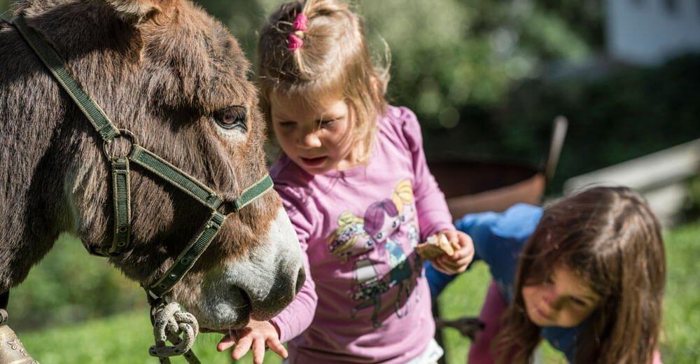 Unsere Quarter Horses und Eselin Giulia