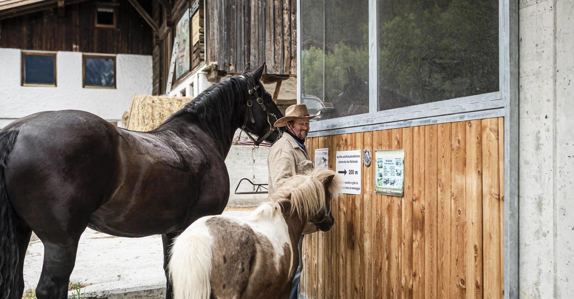 Tiere am Bauernhof Ahrntal - Südtirol